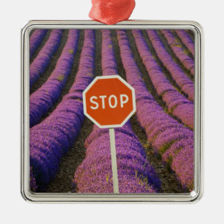 France, Provence. Rows of lavender and stop Christmas Ornament