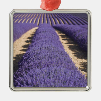France, Provence. Rows of lavender in bloom. 3 Silver-Colored Square Decoration