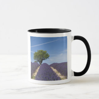 France, Provence. Rows of lavender in bloom. 4 Mug