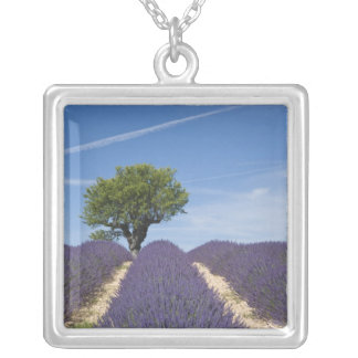 France, Provence. Rows of lavender in bloom. 4 Silver Plated Necklace