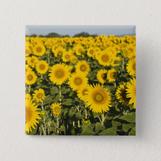 France, Provence, Valensole. Field of 15 Cm Square Badge