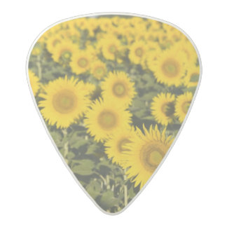 France, Provence, Valensole. Field of Acetal Guitar Pick