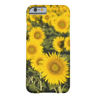 France, Provence, Valensole. Field of Barely There iPhone 6 Case