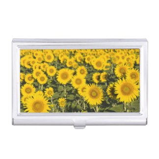 France, Provence, Valensole. Field of Business Card Holder
