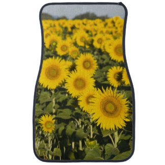 France, Provence, Valensole. Field of Car Mat