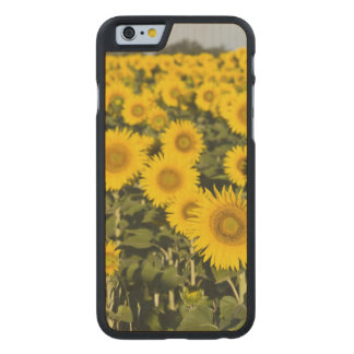 France, Provence, Valensole. Field of Carved Maple iPhone 6 Case