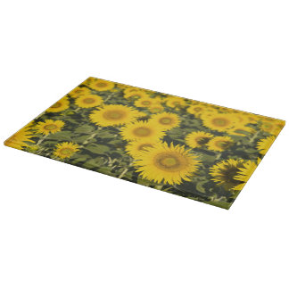 France, Provence, Valensole. Field of Cutting Board