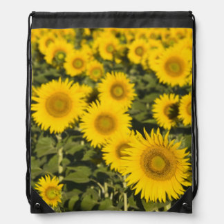 France, Provence, Valensole. Field of Drawstring Bag