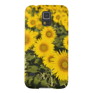 France, Provence, Valensole. Field of Galaxy S5 Cover