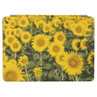 France, Provence, Valensole. Field of iPad Air Cover