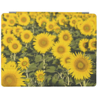 France, Provence, Valensole. Field of iPad Cover