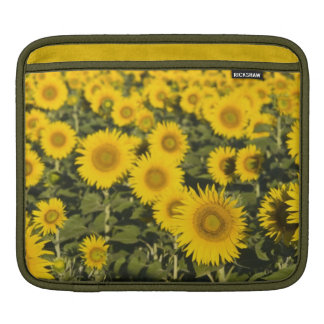 France, Provence, Valensole. Field of iPad Sleeve