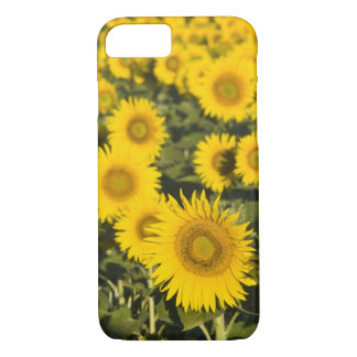 France, Provence, Valensole. Field of iPhone 8/7 Case