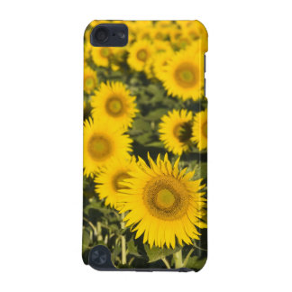 France, Provence, Valensole. Field of iPod Touch (5th Generation) Case