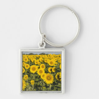 France, Provence, Valensole. Field of Key Ring