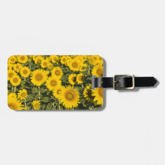 France, Provence, Valensole. Field of Luggage Tag