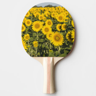 France, Provence, Valensole. Field of Ping Pong Paddle