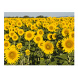 France, Provence, Valensole. Field of Post Cards