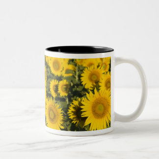 France, Provence, Valensole. Field of Two-Tone Coffee Mug