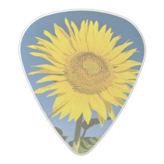 France, Provence, Valensole. Sunflowers stand Acetal Guitar Pick
