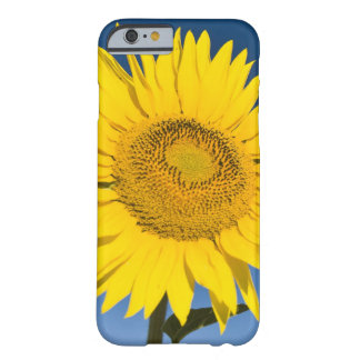 France, Provence, Valensole. Sunflowers stand Barely There iPhone 6 Case