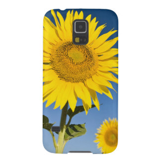 France, Provence, Valensole. Sunflowers stand Cases For Galaxy S5