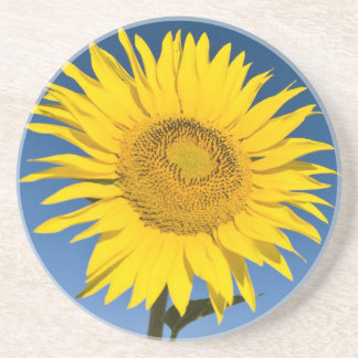 France, Provence, Valensole. Sunflowers stand Coaster