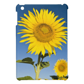 France, Provence, Valensole. Sunflowers stand Cover For The iPad Mini