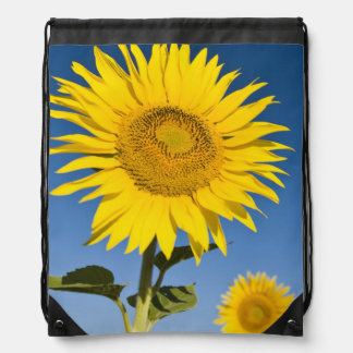 France, Provence, Valensole. Sunflowers stand Drawstring Bag
