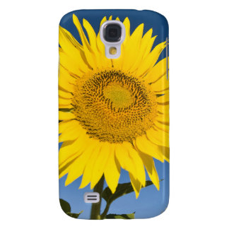 France, Provence, Valensole. Sunflowers stand Galaxy S4 Case