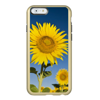France, Provence, Valensole. Sunflowers stand Incipio Feather® Shine iPhone 6 Case