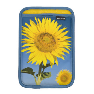 France, Provence, Valensole. Sunflowers stand iPad Mini Sleeve