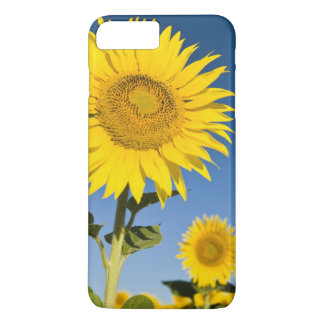 France, Provence, Valensole. Sunflowers stand iPhone 8 Plus/7 Plus Case