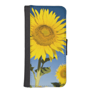 France, Provence, Valensole. Sunflowers stand iPhone SE/5/5s Wallet Case