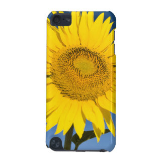 France, Provence, Valensole. Sunflowers stand iPod Touch (5th Generation) Covers