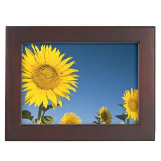 France, Provence, Valensole. Sunflowers stand Keepsake Box