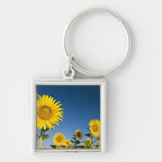 France, Provence, Valensole. Sunflowers stand Key Ring