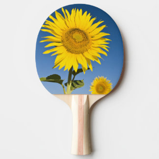 France, Provence, Valensole. Sunflowers stand Ping Pong Paddle
