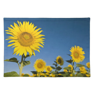 France, Provence, Valensole. Sunflowers stand Placemat