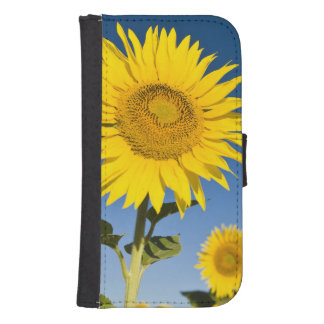 France, Provence, Valensole. Sunflowers stand Samsung S4 Wallet Case