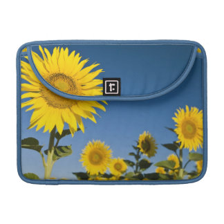 France, Provence, Valensole. Sunflowers stand Sleeve For MacBooks