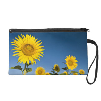 France, Provence, Valensole. Sunflowers stand Wristlet