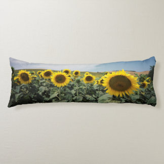 France Provence, View of sunflowers field Body Cushion