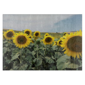 France Provence, View of sunflowers field Cutting Board