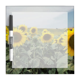 France Provence, View of sunflowers field Dry Erase Board