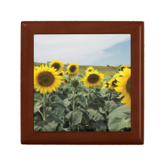 France Provence, View of sunflowers field Gift Box