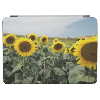 France Provence, View of sunflowers field iPad Air Cover