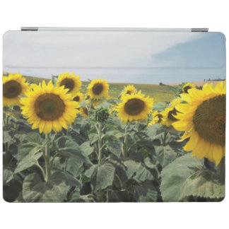 France Provence, View of sunflowers field iPad Cover