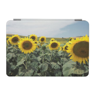 France Provence, View of sunflowers field iPad Mini Cover