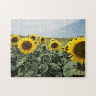 France Provence, View of sunflowers field Jigsaw Puzzle